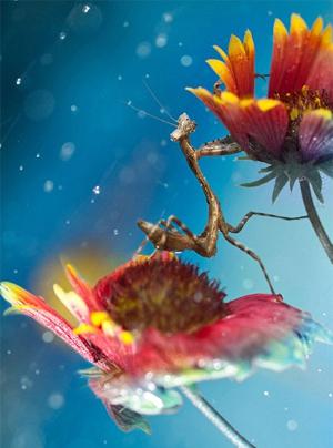ants13
