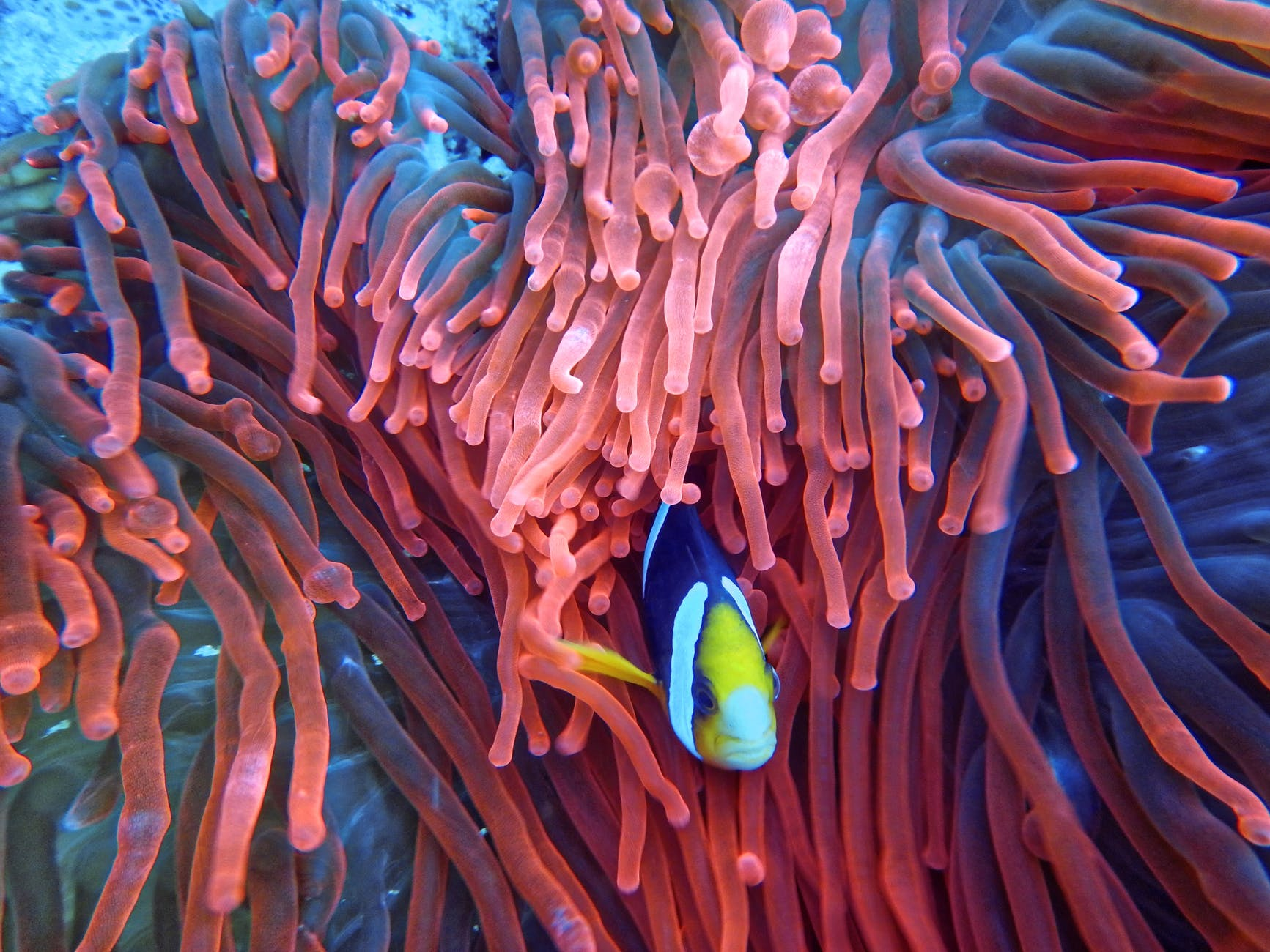 photo of a fish on corals
