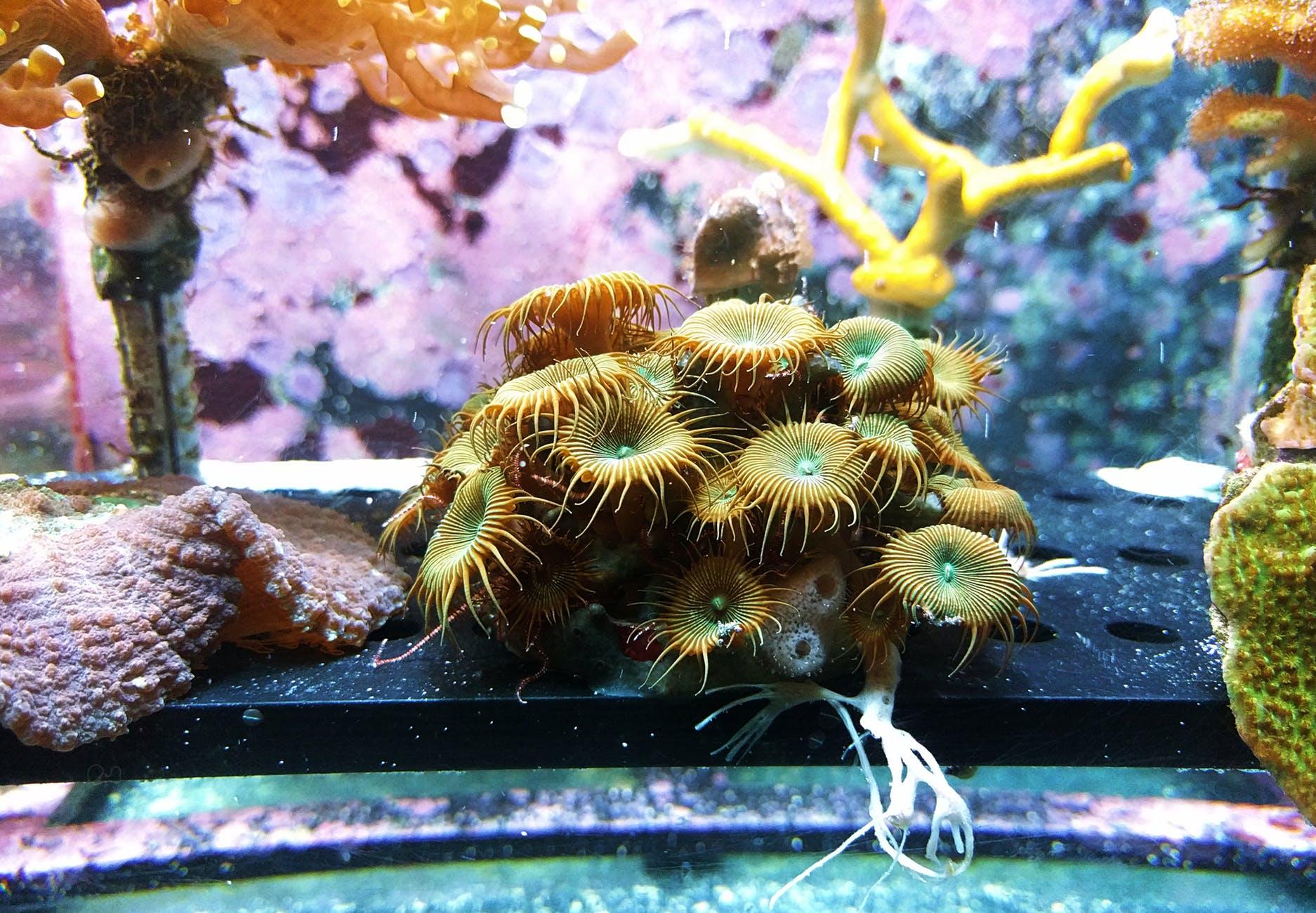 brown sea creature inside fish tank