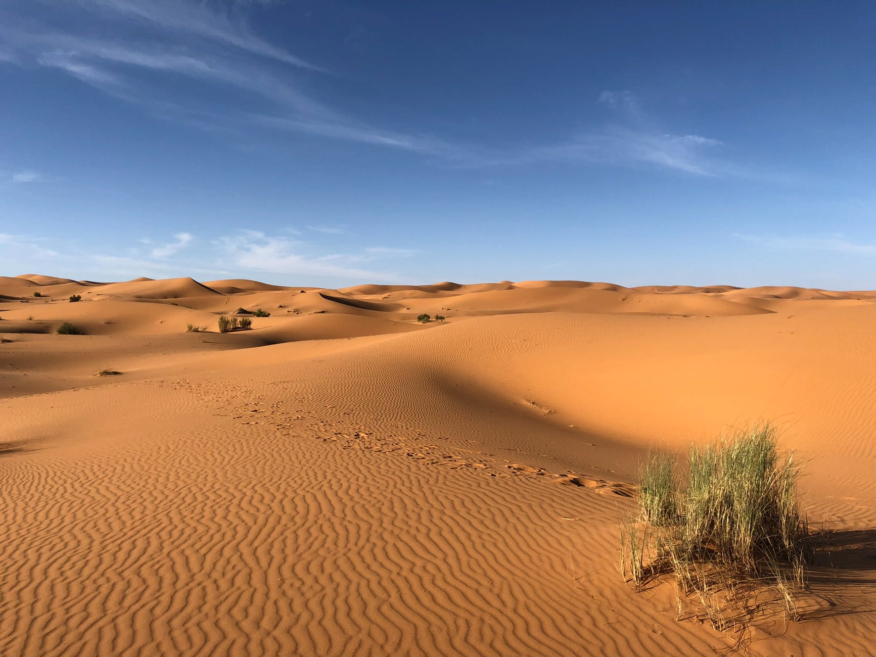 green grasses on sahara desert