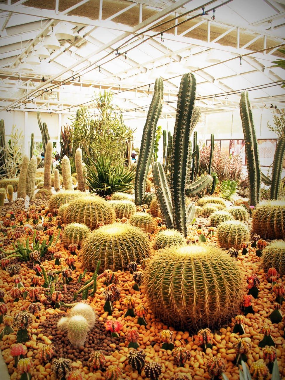botanical cactus plant cactuses colors